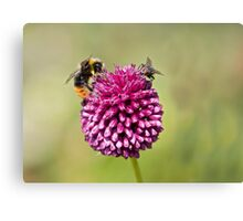 Bee and Fly punchup! Canvas Print