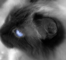 blue by Bogdan Ciocsan