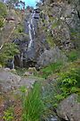 Clematis Falls  by mspfoto