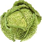 Savoy Cabbage by Maureen Sparling