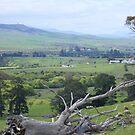 countryside Tasmania - near Ouse. by gaylene