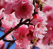 Blossum by reflexio