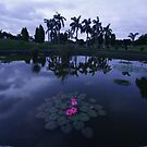 pink lily by jayantilalparma