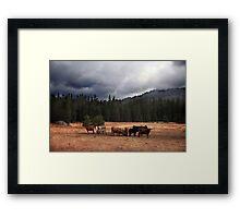 California Cows Framed Print