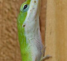 Green Anole Climbing Sticker