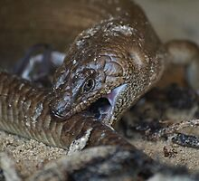 King's Skink II by Jon Staniland