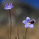 A bug and a flower by Tim Bates
