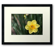 Alone Amidst the Leaves Framed Print