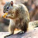 THE AUTUMN BANANA SQUIRREL by Magaret Meintjes