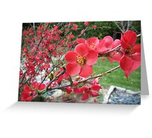 Zen Blossoms Greeting Card