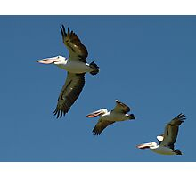 Pelicans In A Row Photographic Print