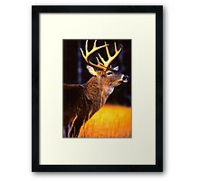 The Guardian 2 Framed Print