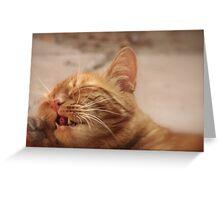 Cat Call? Greeting Card