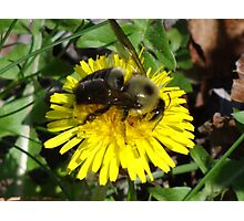 Big Bumble Photographic Print