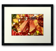 Autumn Color Framed Print