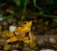 Golden Frog by Colin Harper by Mike Oxley