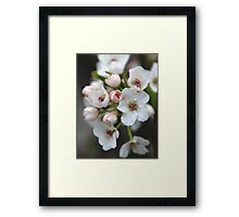 White and Pink Flowers Framed Print