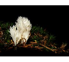 Soft coral Photographic Print
