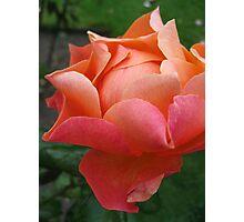 Rose Softness no.2 Photographic Print