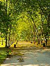Autumn Avenue by DonDavisUK