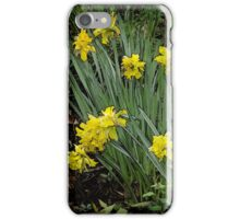 Daffodils of days gone by iPhone Case/Skin