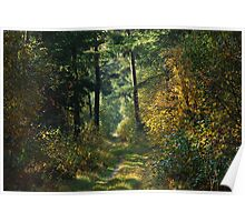 Walking in the forest again in October 2009 Poster