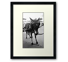 New Orleans Horse and Carriage Ride Framed Print