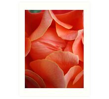 Rose Petal Abstract no.3 Art Print