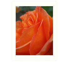 Rose Petal Abstract Art Print