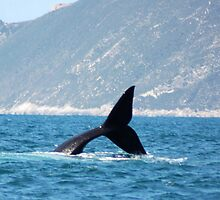 Whale Tail by Eve Parry