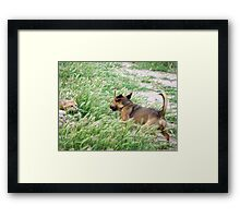 Crouching tiger, charging dragon Framed Print