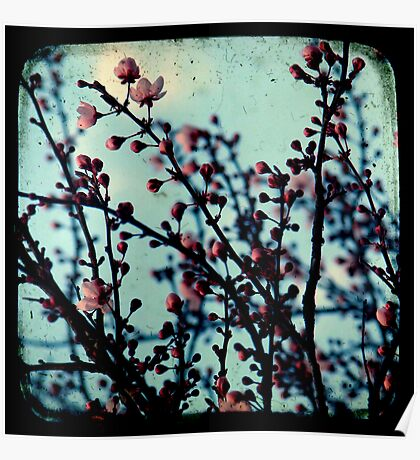 Spring Blossoms Through The Viewfinder - TTV Poster