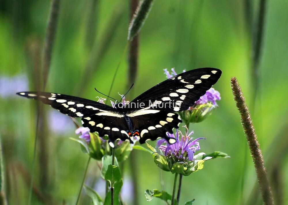 Butterfly  by Vonnie Murfin