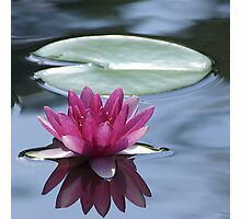 water lily and lily pad in dark water Photographic Print