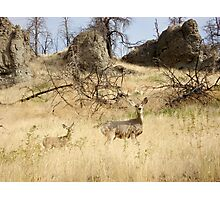 Freeze, Bambi! Photographic Print