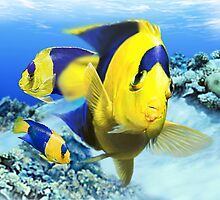 BICOLOR ANGELFISH by DilettantO