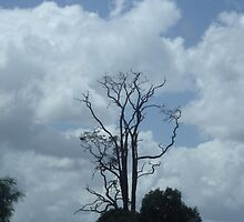 Dead Tree by Jess Jones