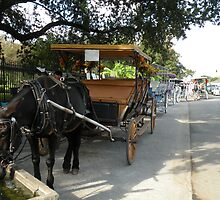 carriages for hire... Decatur Street, French Quarter, New Orleans by WonderlandGlass