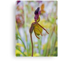 Flying duck Orchid Canvas Print