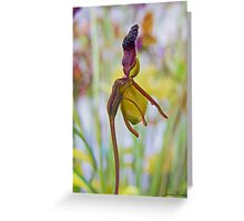 Flying duck Orchid Greeting Card