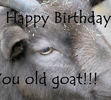 Happy Birthday - Goat  by Michelle BarlondSmith