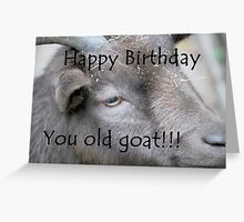 Happy Birthday - Goat  Greeting Card