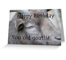 Happy Birthday - Goat  Greeting Card