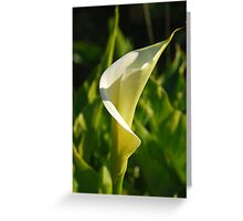 Calla Lilly Greeting Card