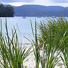 peaceful Carnarvon Bay, Tasmania  by gaylene