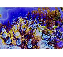 Coral Carnival Photographic Print