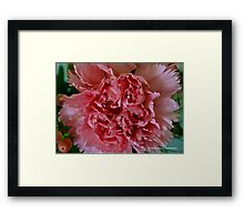 Pink Carnation Framed Print