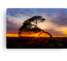 Natures Bow Canvas Print