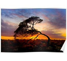 Natures Bow Poster