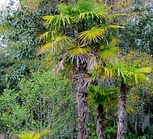Family of Palm Trees by Cynthia48
